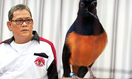 Murai Non Ring 2020 Masuk Burung Yang Dilindungi