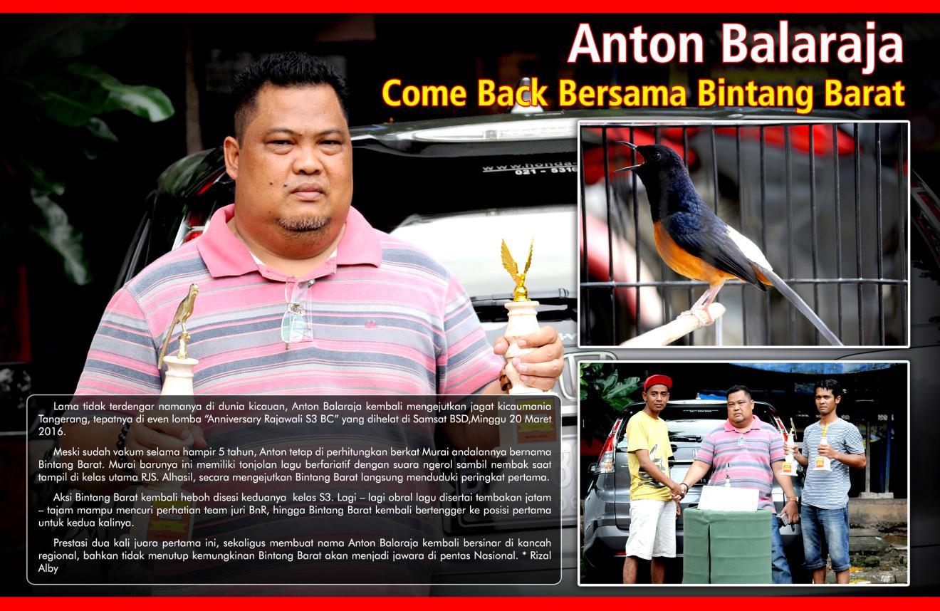 Anton Balaraja Come Back Bersama Bintang Darat