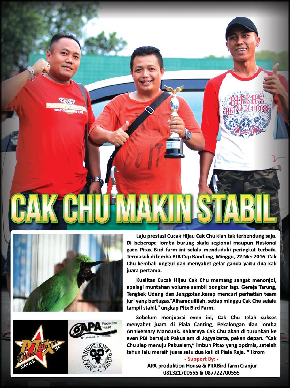 PTX Bird Farm : Cak Chu Makin Stabil