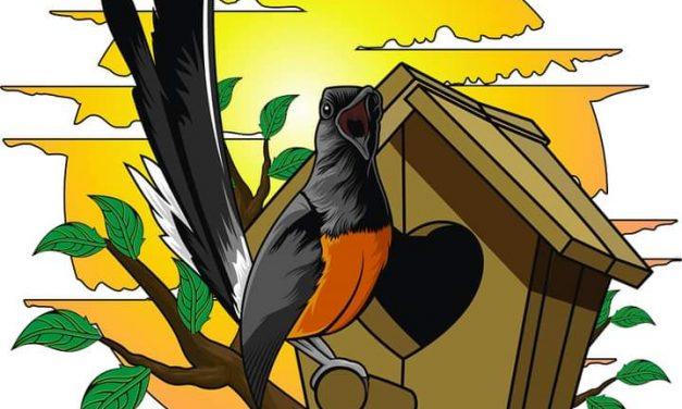 Ar Rauf Bird Farm Jakarta Utara – Total Koleksi 7 Pasang, Empat Diantaranya Sudah Rajin Produksi, Hasil Anakannya Laris Manis!