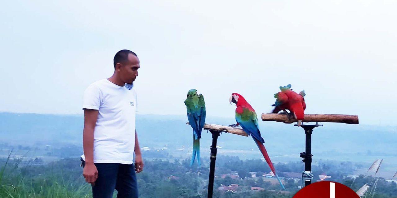 BnR PARROT INDONESIA