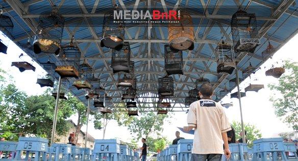 Vertigo, Laskar, Gatot Kaca dan Bala Dewa Double Winner