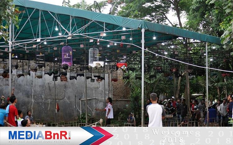 Kontestan Balibu Makin Menjamur, RadhaMengorbit Dikelas Lovebird Utama