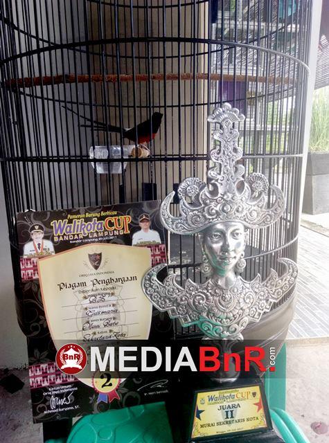 Raih Runner Up Dikelas Murai Batu,512 Bird Farm Buktikan Kualitas Hasil Penangkaran Mereka