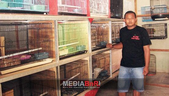 Guru SD di Sukoharjo Budidaya Love Bird Trah Prestasi