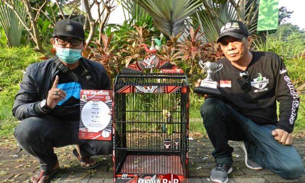 Bongkar Rahasia Cucak Hijau Jaggur, Tiap Pekan Selalu Juara