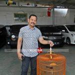 Pasca Mabung, Prestasi Murai Batu Pangeran Kian Tak Terbendung. Nyaris Cetak Nyeri di THR Cup 3 Tangerang.