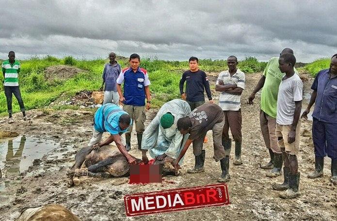 BnR Indonesia Berbagi Kurban di Rep. South Sudan