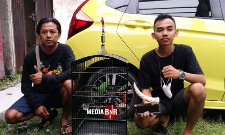 Cucak Hijau Triad gemparkan Solo Raya (20/06/2021)