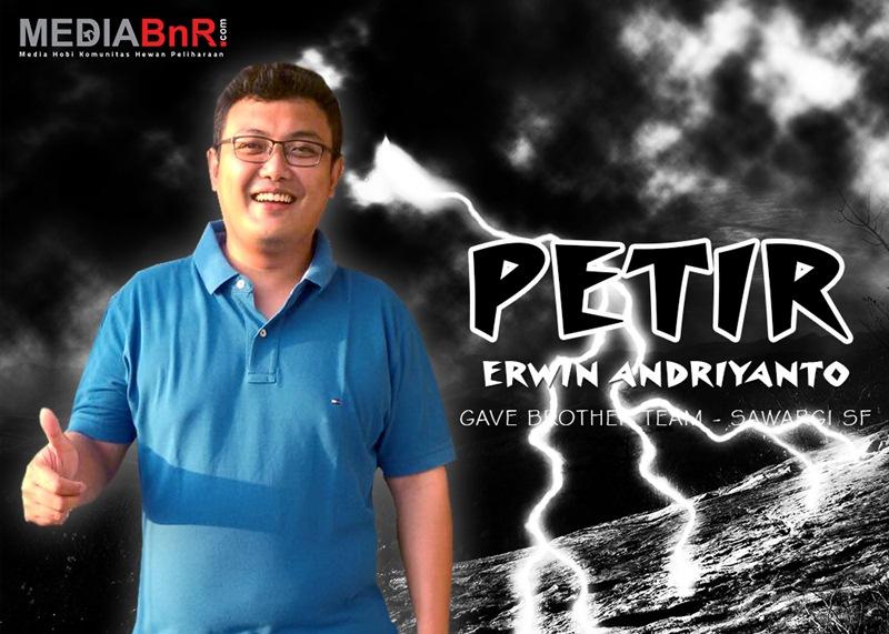 Erwin Andriyanto - Pleci Petir