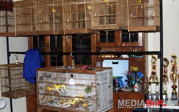 Galery Kandang YS Pak Juri Palagan - Beberapa Sudah Berprestasi di Lapangan