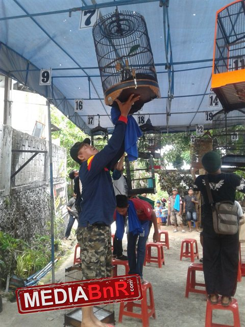 Gelaran latber kicaumania Jayapura-Papua (3)