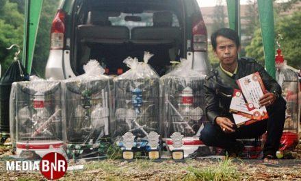 Sangkar Alfa Jaya Bagikan Bonus
