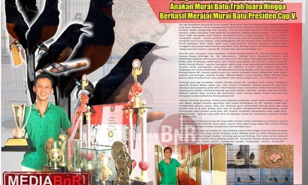 Penghobi Arwana, Sukses Breeding Anakan Murai Batu Trah Juara Hingga Berhasil Merajai Murai Batu Presiden Cup V