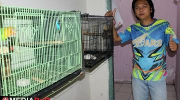 Home Bird Farming Tempat Yohannes Cetak Anakan Juara
