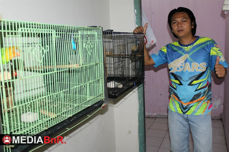 Babayaga Bird Farm – Spesialis Pencetak Love Bird Balibu Juara
