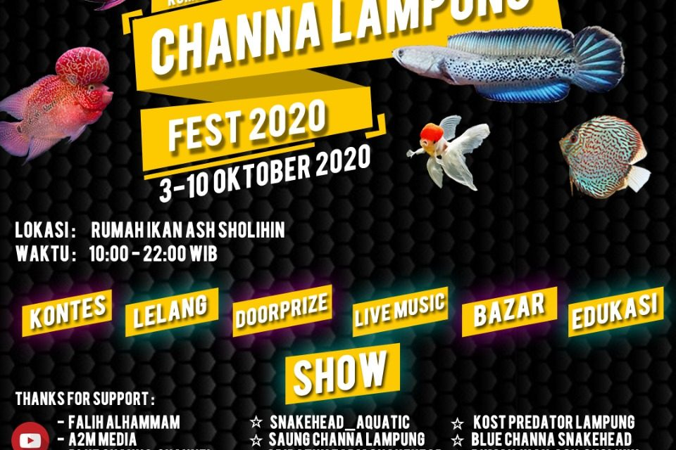 Lampung Aquatic Community Helat Hajat Akbar Bertajuk Channa Fest 2020
