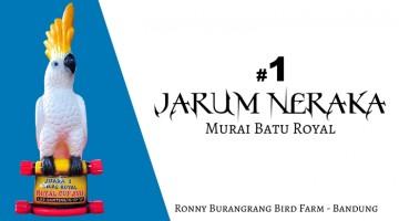 Jarum Neraka raih juara kelas utama Murai Batu Royal