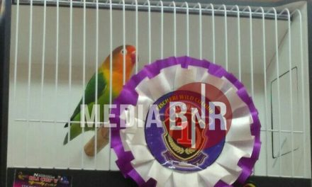 Gelar Edukasi & Eksebisi Beauty Contest Love Bird