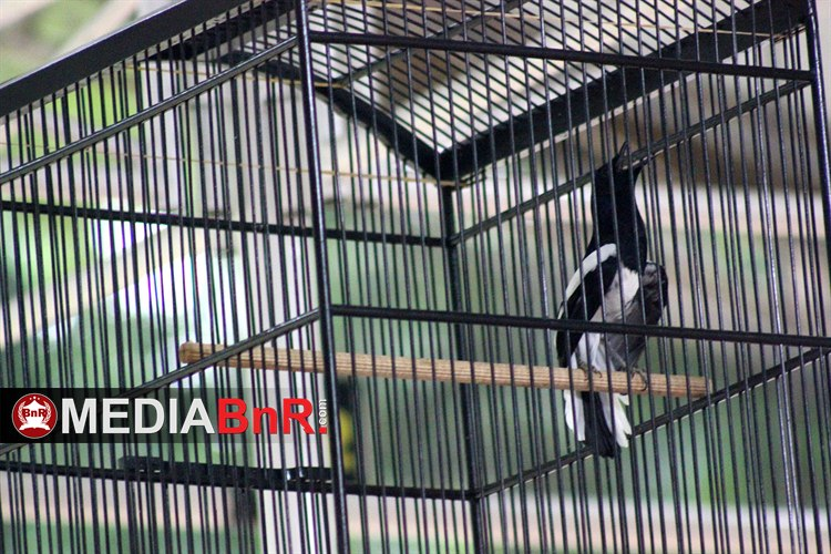 Selalu Tampil Jawara – Jawara Anyar Disetiap Gelaran