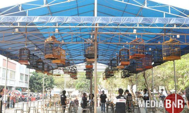 Adu Kwalitas Burung Jawara, Ps. Bersih Ent Tempatnya