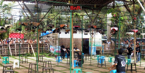The Kill dan Santi Melesat, KKLB Mendominasi