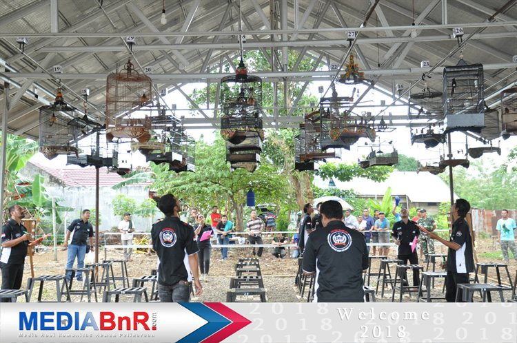 Kelas Murai Borneo Masih  Primadona