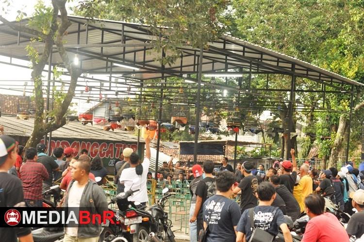 Cinta Hitam, Pemburu Dolar, Panda Sakti Raja Arena, Blorong, Toruk Macrho  Stabil