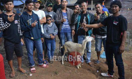 Duel Hokky & Rewok Sadis – Alas Roban Bc Borong Juara, Nawangga Sf & Pakuwojo Bc Rajai Tahta Juara Umum