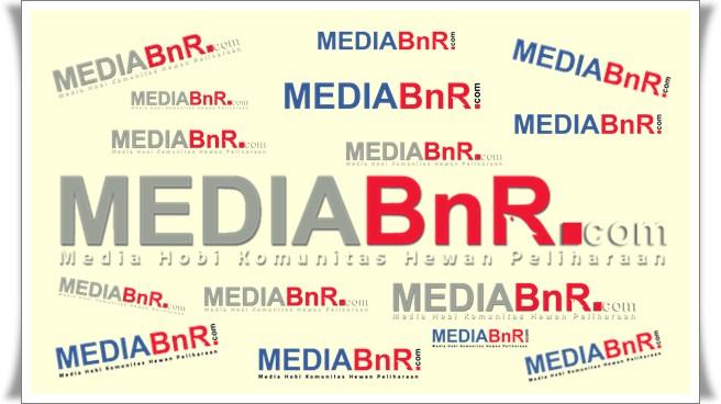 Media BnR Sambut Hari Pers 12 Febuari di Banteng