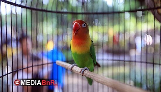 BnR Akan Libatkan Peserta Menilai Love Bird
