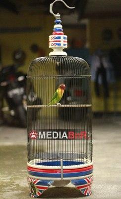 Love Bird Shae