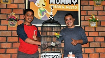 Lovebird Balibu Marcholic