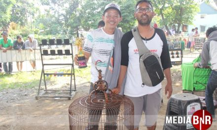 Batosai Dobel Winner, Aurora-Karakata Bersinar