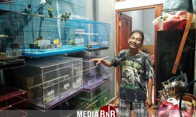 Deasy Kwang, Gegara Cucak Hijau, Akhirnya Kepincut Terjun Didunia Kicaumania, Hingga Breeding Love Bird