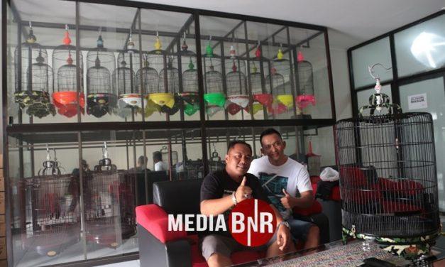 Purwanto Prima SF Brebes – Borong Sangkar Radja Untuk MB Kitaro & Donat