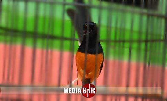 GRAND LAUNCHING BIC DPW BEKASI RAYA – Curi Perhatian Peserta, Kacer Jhon Rambo & MB Semut Merah Lanjut ke BnR Satoe Cup 1 Cibubur