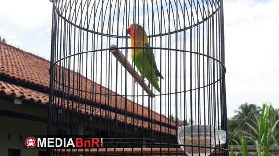 Melati: Lovebird Durasi 3 Menit 13 Detik