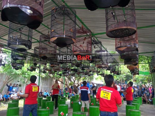 Memanas dikelas Muray batu full 70 gantangan