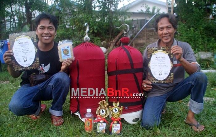Mumun Milik Yono KBY Stabil di Jalur Juara Berkat Pakan PR