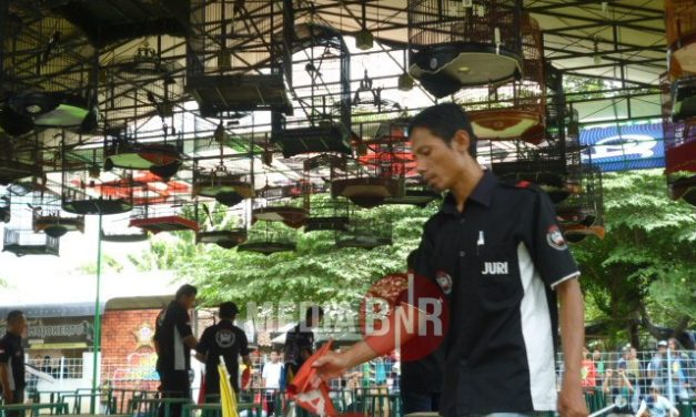 Membludak Pesertanya, DT King Of Mojopahit Cup 2 Dan DT SAA SF Moxer Andil Meramaikan
