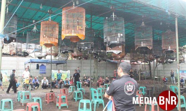 Saraf Pentatrick, Paser Gemilang, Gangster Double Winner