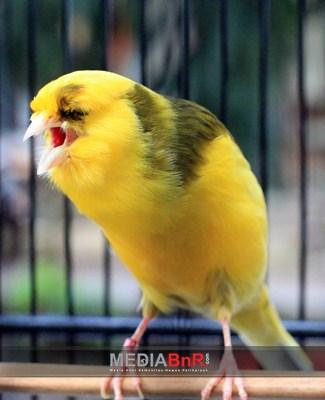 BnR Satu Jenis Burung?
