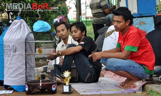 Tiga Jawara Lovebird Mencuri Perhatian