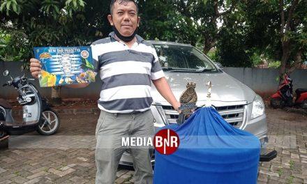Burung Cabutan, Murai Batu Mamba Stabil Juara di Arena New BnR Prasetya
