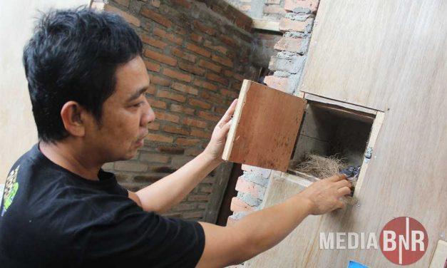 KARYAWAN SEBUAH BANK YANG SUKSES MENJADI BREEDER