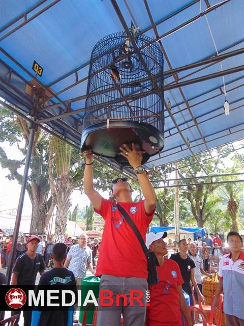 Penggantungan Burung oleh Kasat Reskrim Kota sawahlunto