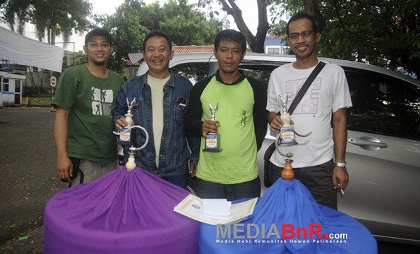 Perform Maxi koleksi Gurning sabet nyeri di Murai Batu (Foto: Arie/MediaBnR.Com)
