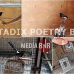 Tadix Poetry BF Kemayoran