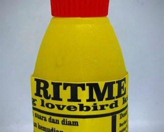 Love Bird Kita Dibuat Korslet, Paruh Buka Dan Jeda Rapat Oleh Ritme